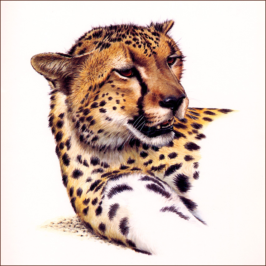 Гай Кохелич. Голова гепарда
