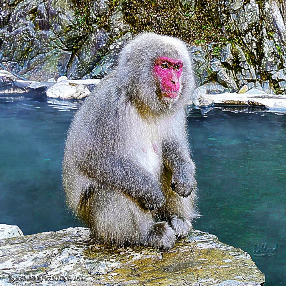 Vasiliy Mishchenko. Japanese macaque
