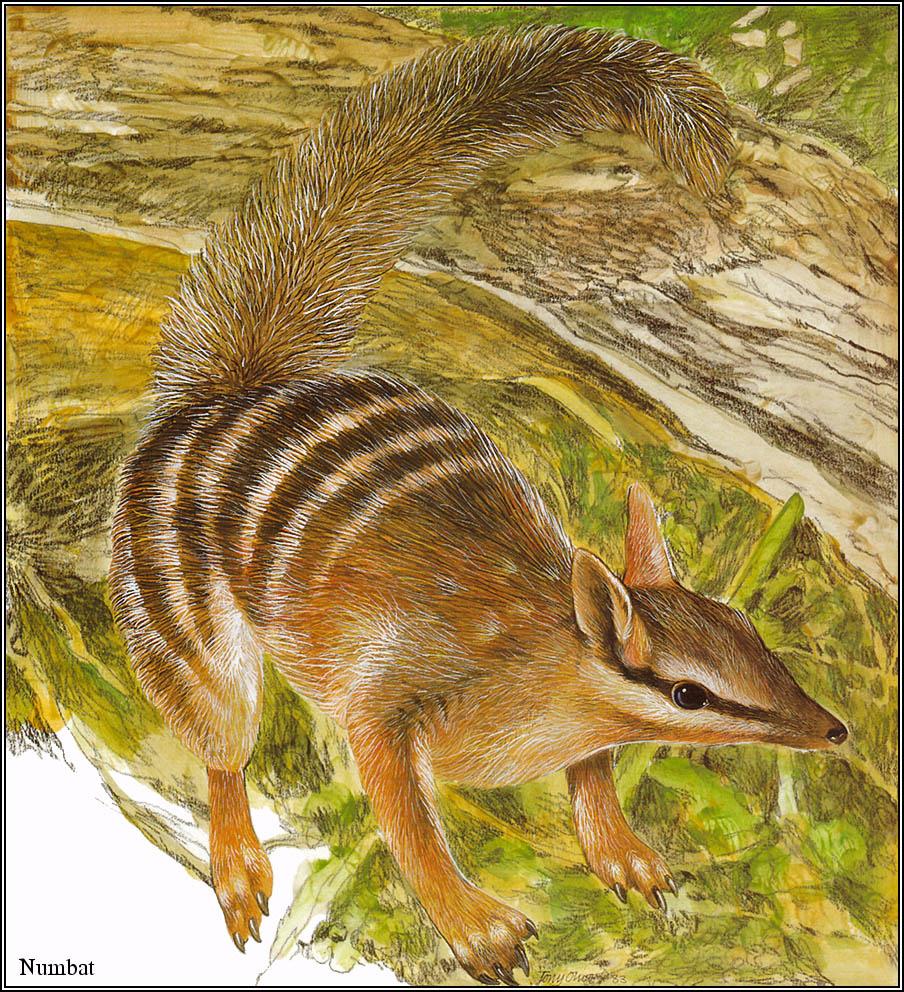 Тони Оливер. Австралийские вымирающие виды 20