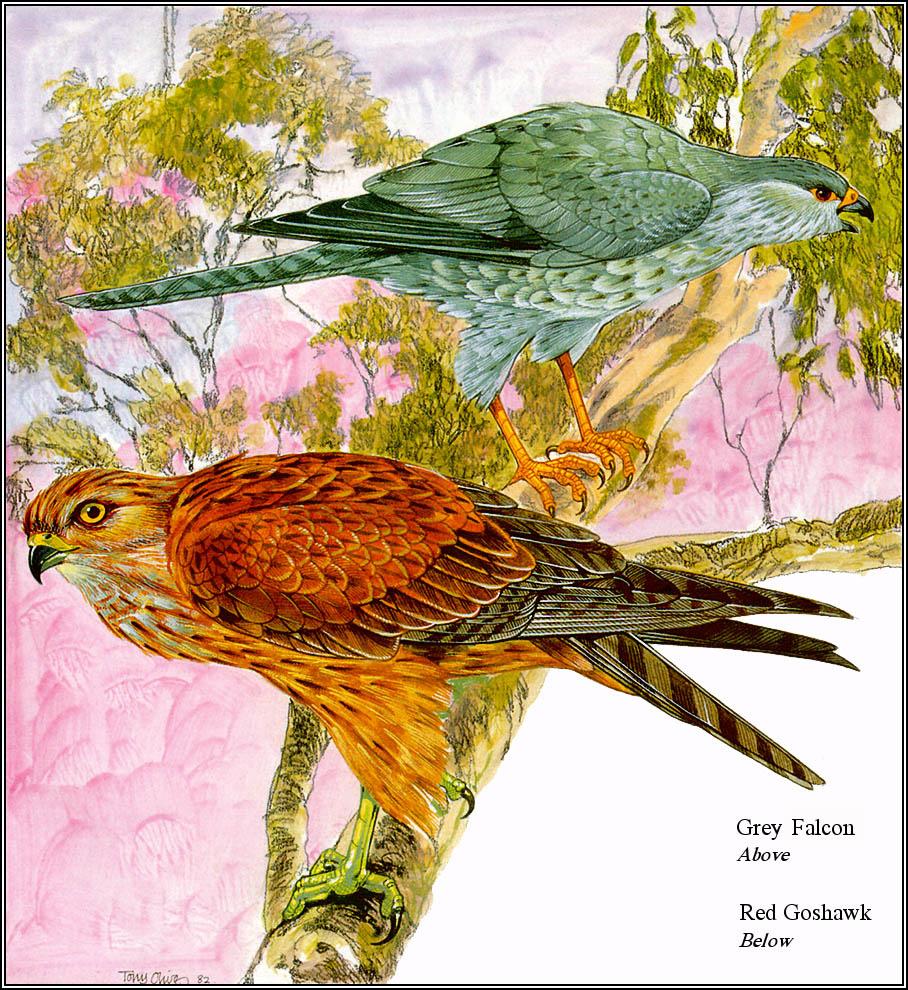 Тони Оливер. Австралийские вымирающие виды 04