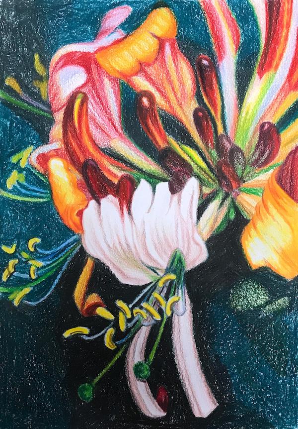 Larissa Lukaneva. Honeysuckle flower