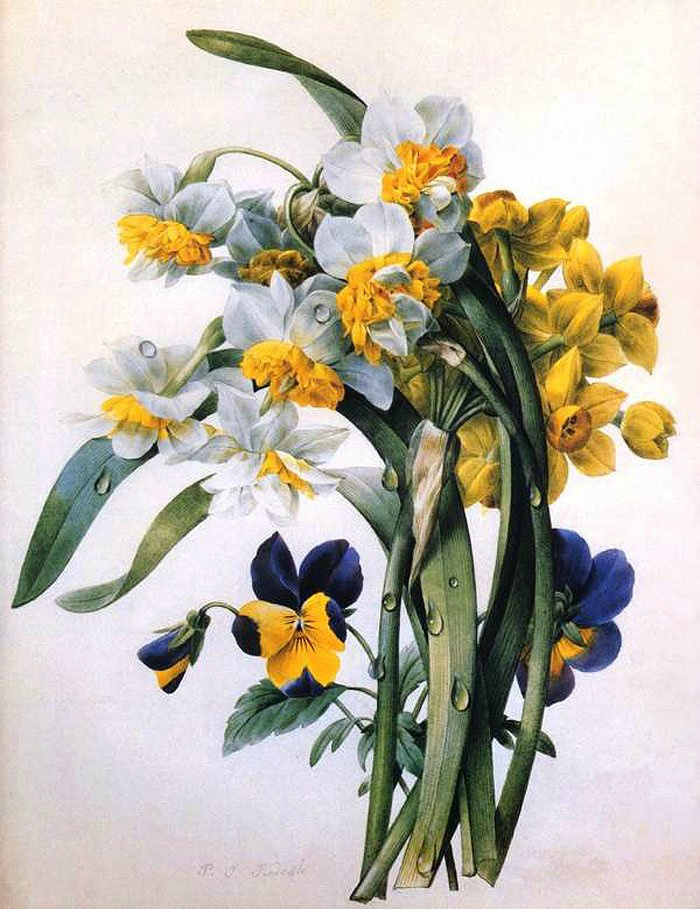 Pierre-Joseph Redoute. Daffodils and pansies
