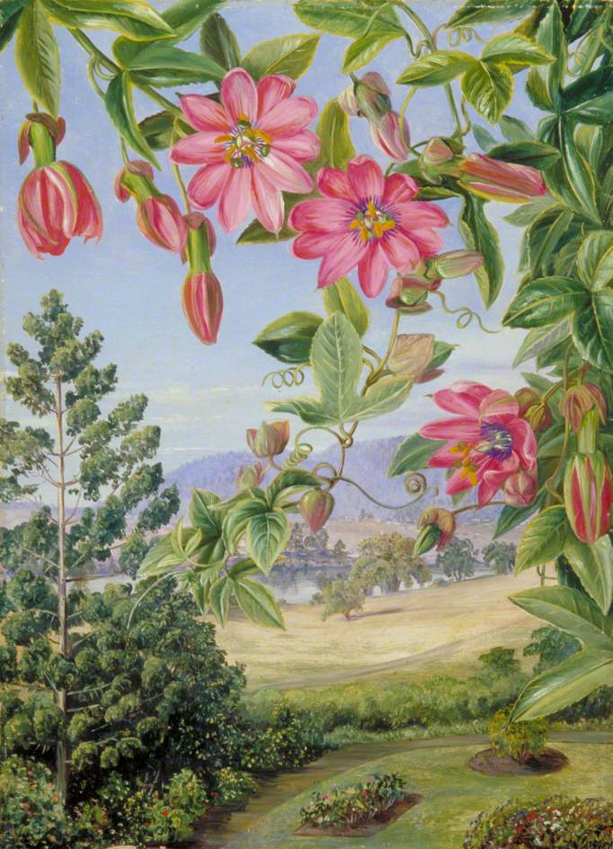 Марианна Норт. Цветы на фоне пейзажа в ботаническом саду Брисбена
