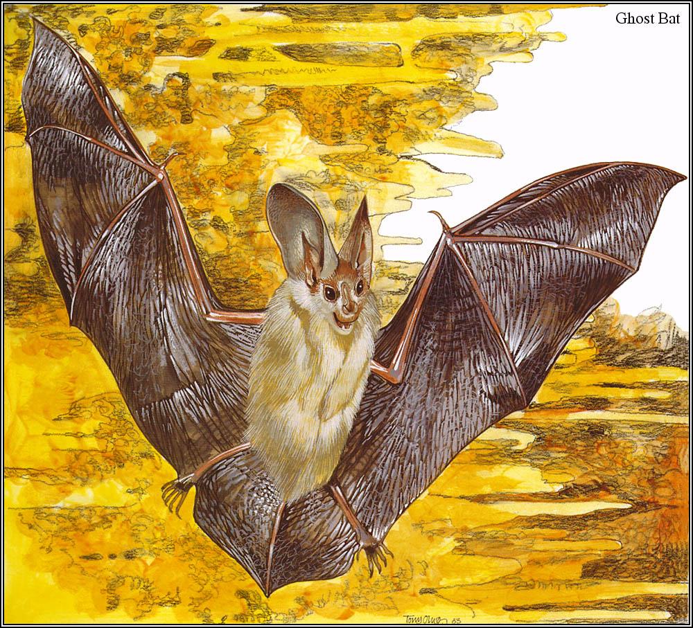 Тони Оливер. Австралийские вымирающие виды 25