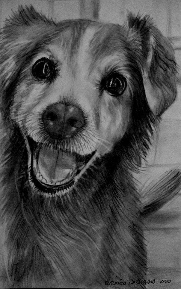 Cristina de biasio. Cuddly dog