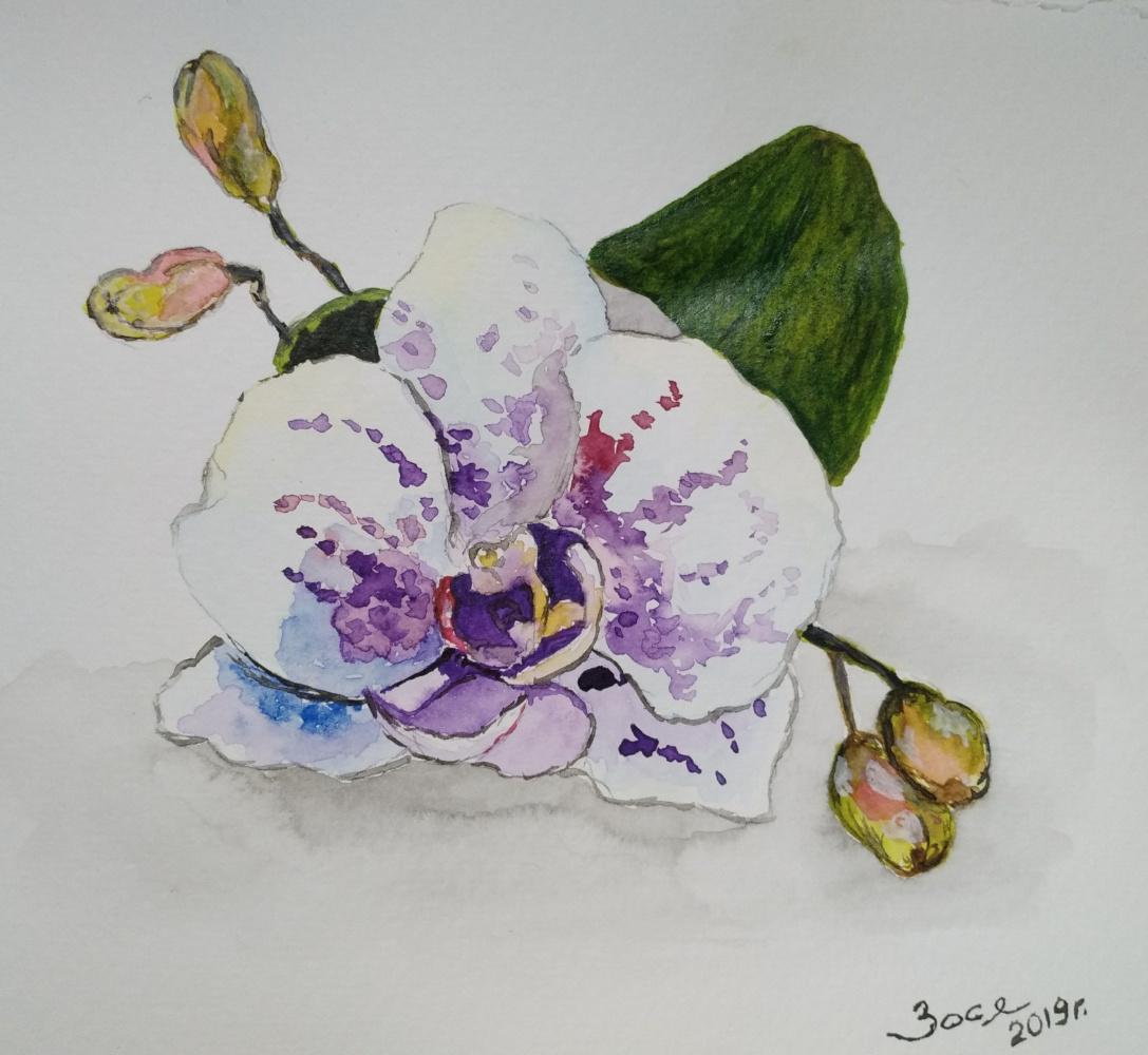 Olga Terekhova. Orchid