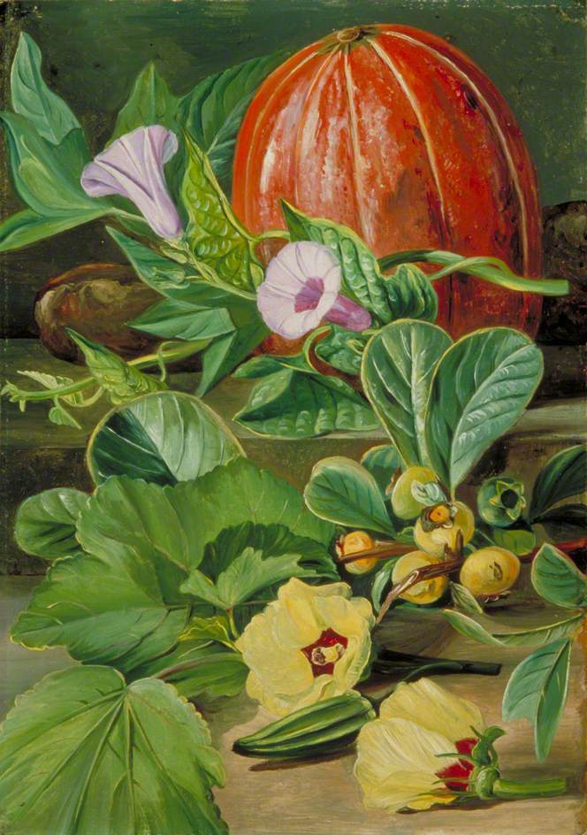 Marianna North. Still life with flowers, fruits and vegetables of Brazil