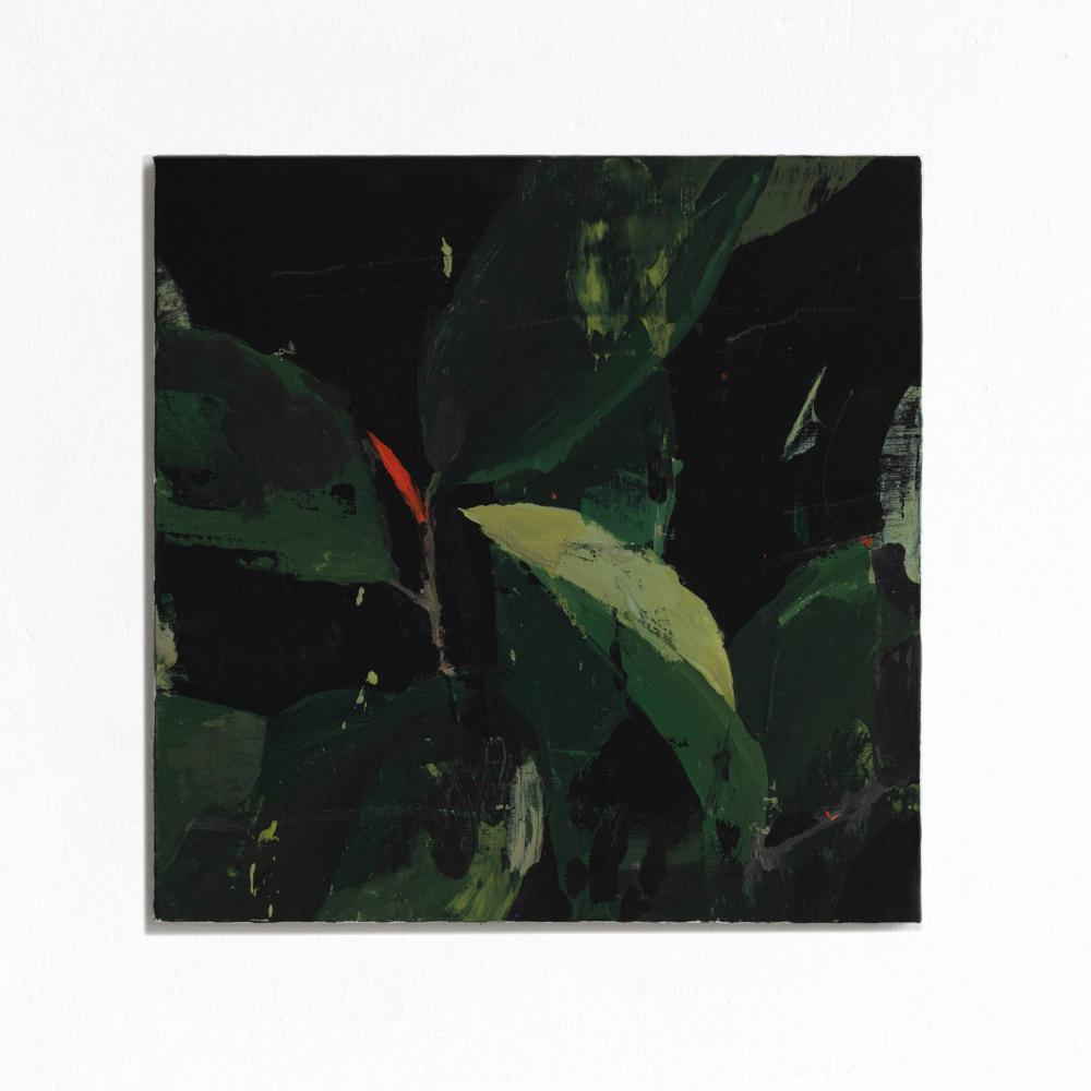 Миша Никатин. Rubber plant on a black background