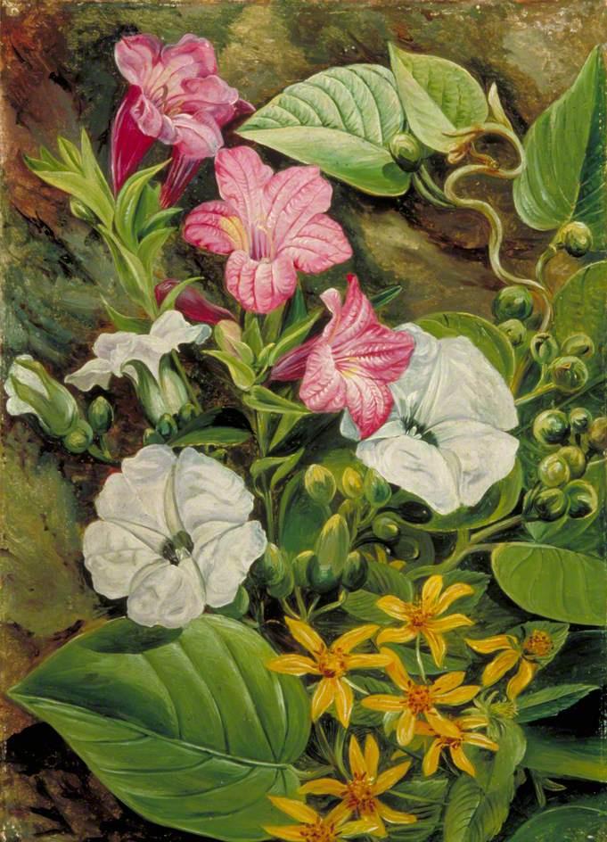 Марианна Норт. Бразильские цветы