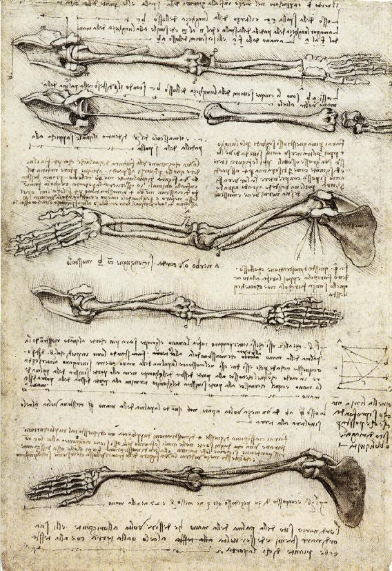Leonardo da Vinci. Hand in motion