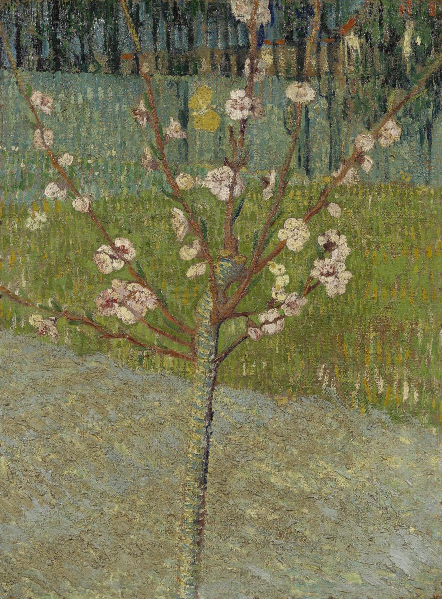 Винсент Ван Гог. Цветущее миндальное дерево