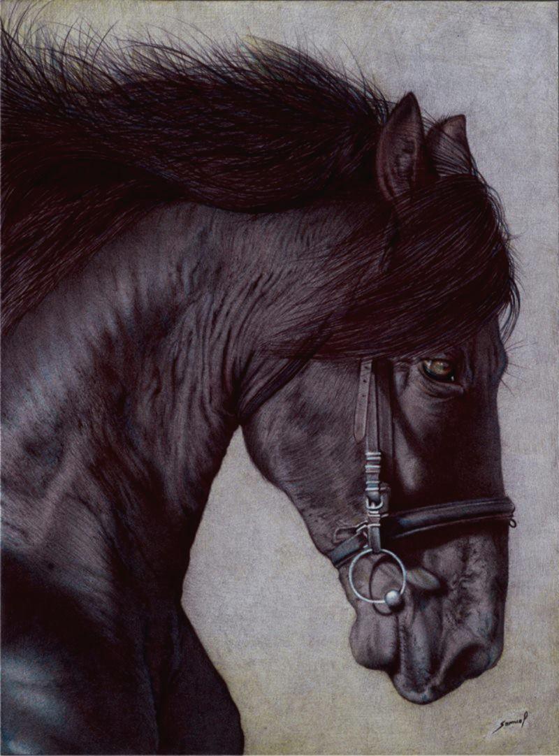 Samuel Silva. Horse's head