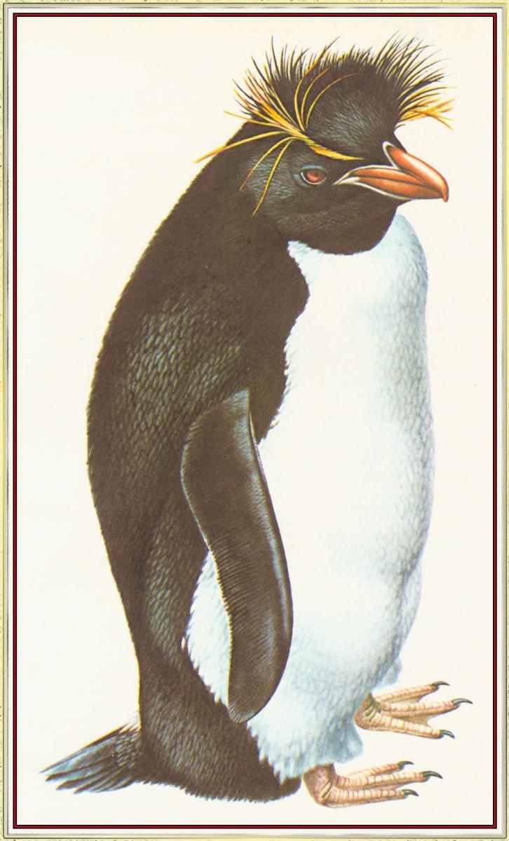 Питер Барретт. Пингвин