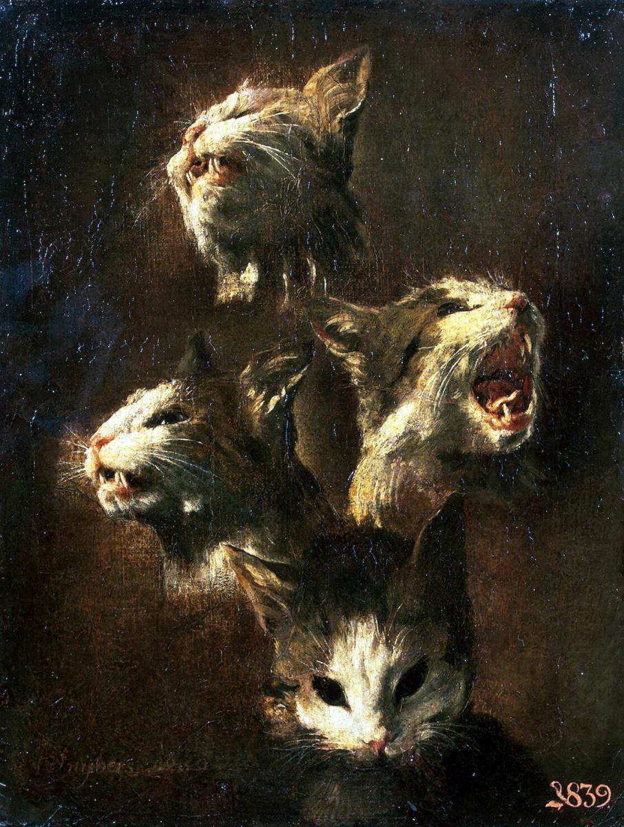 Франс Снейдерс. Этюды головы кошки