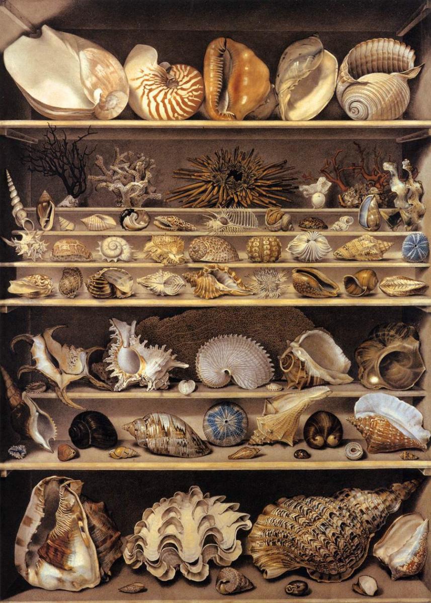 Александр-Исидор Леруа де Бард. Коллекция раковин