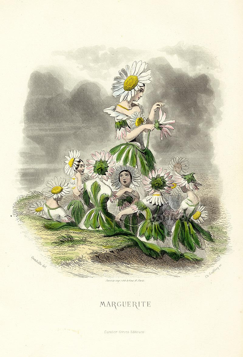 "Jean Inias Isidore (Gerard) Granville. Daisies. The series ""Animate Flowers"""