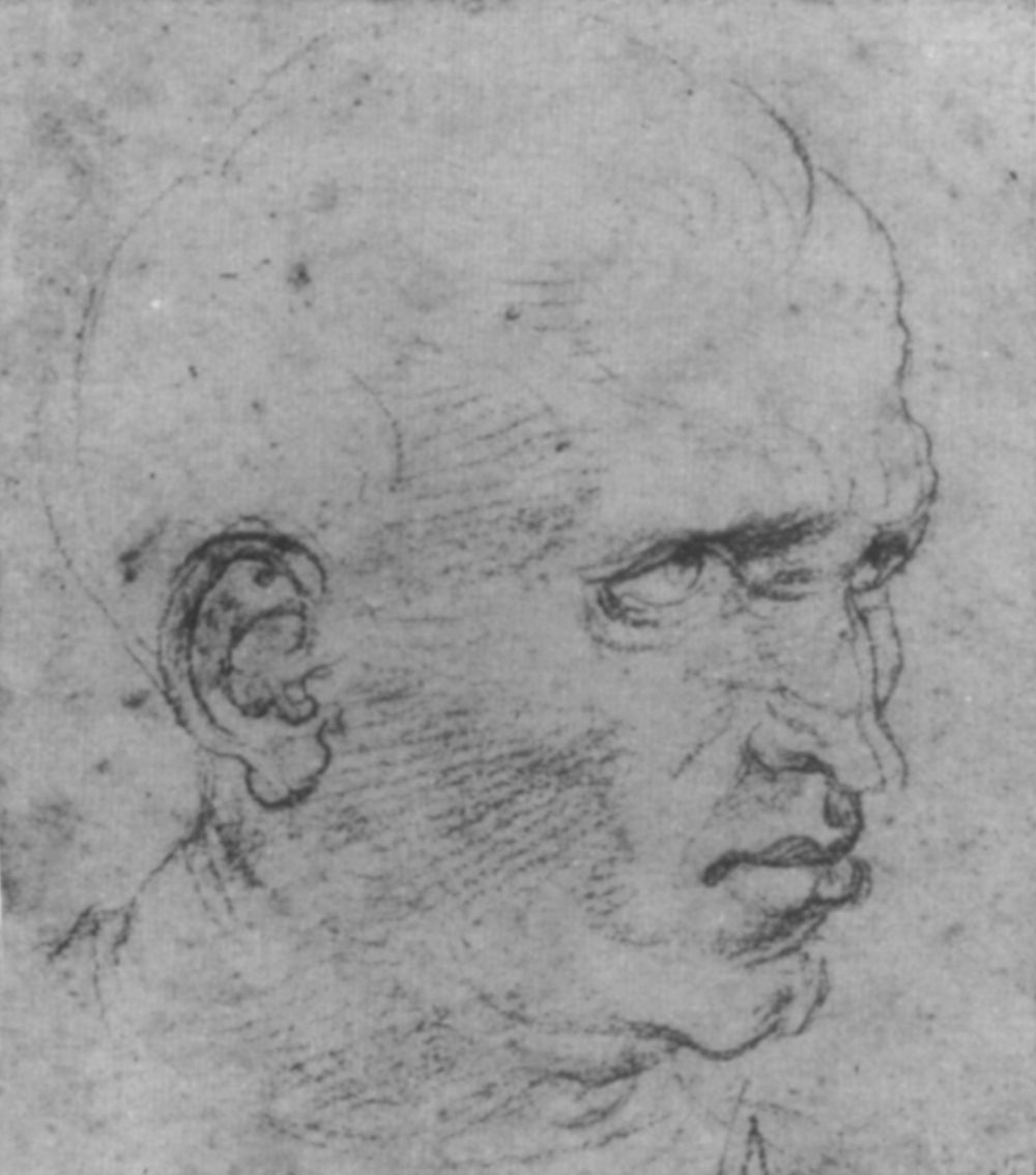 Raphael Sanzio. A sketch of the head of an elderly man in profile