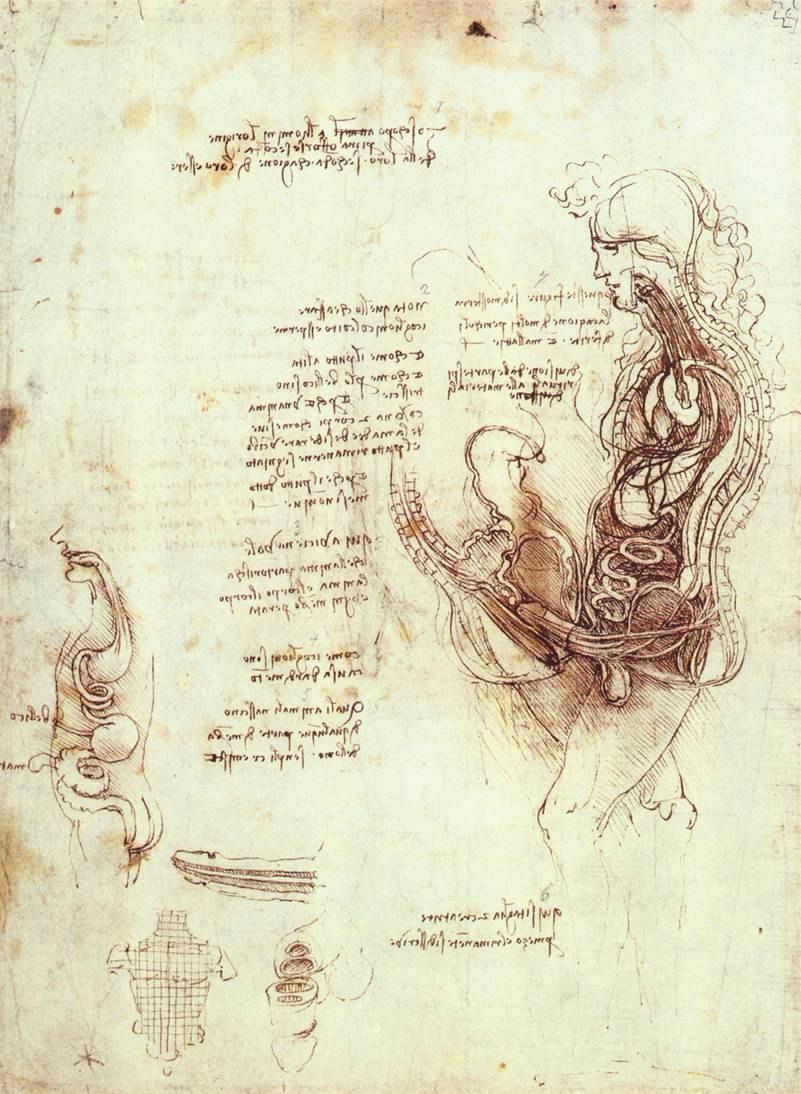 Leonardo da Vinci. The anatomy of the genital organs of men and sexual intercourse in the context
