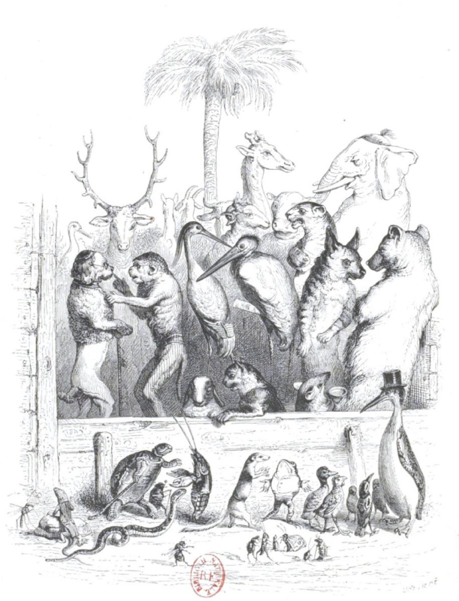 """Жан Иньяс Изидор (Жерар) Гранвиль. Оживленный разговор. """"Сцены общественной и частной жизни животных"""""""
