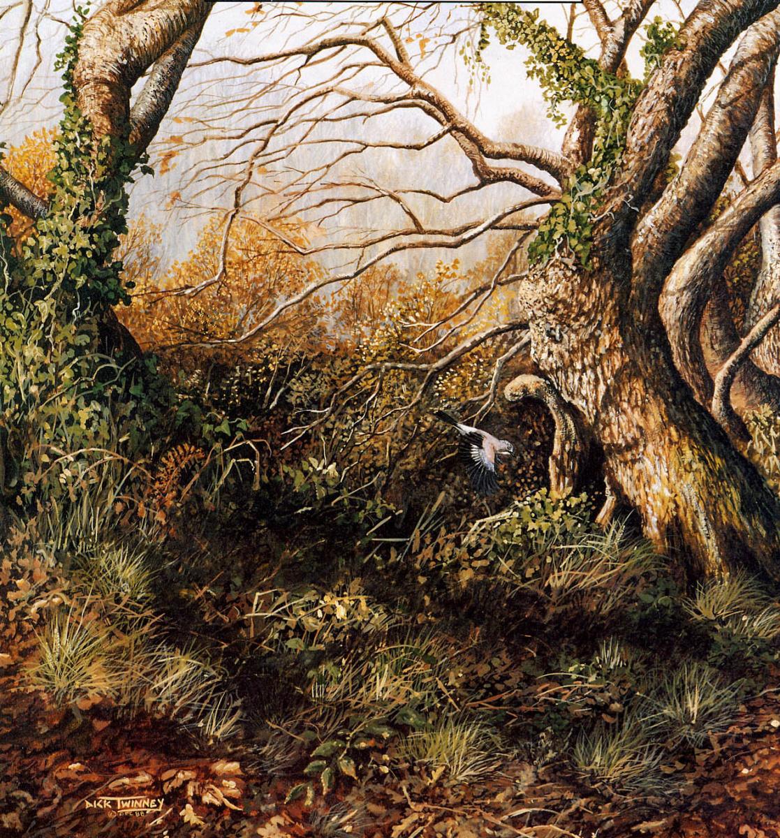 Dick Twinney. Nature 050