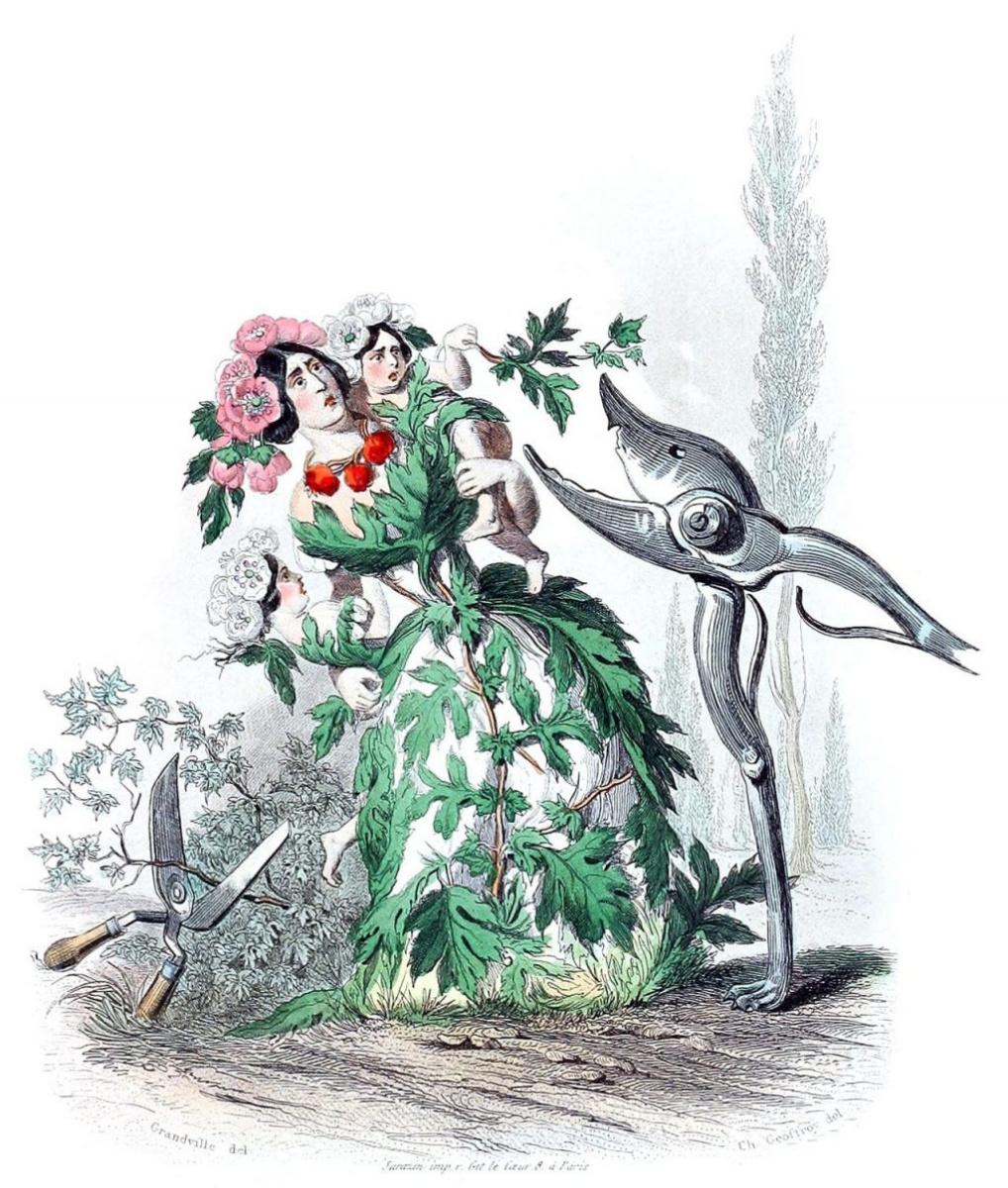 "Jean Inias Isidore (Gerard) Granville. Hawthorn. The series ""Animate Flowers"""