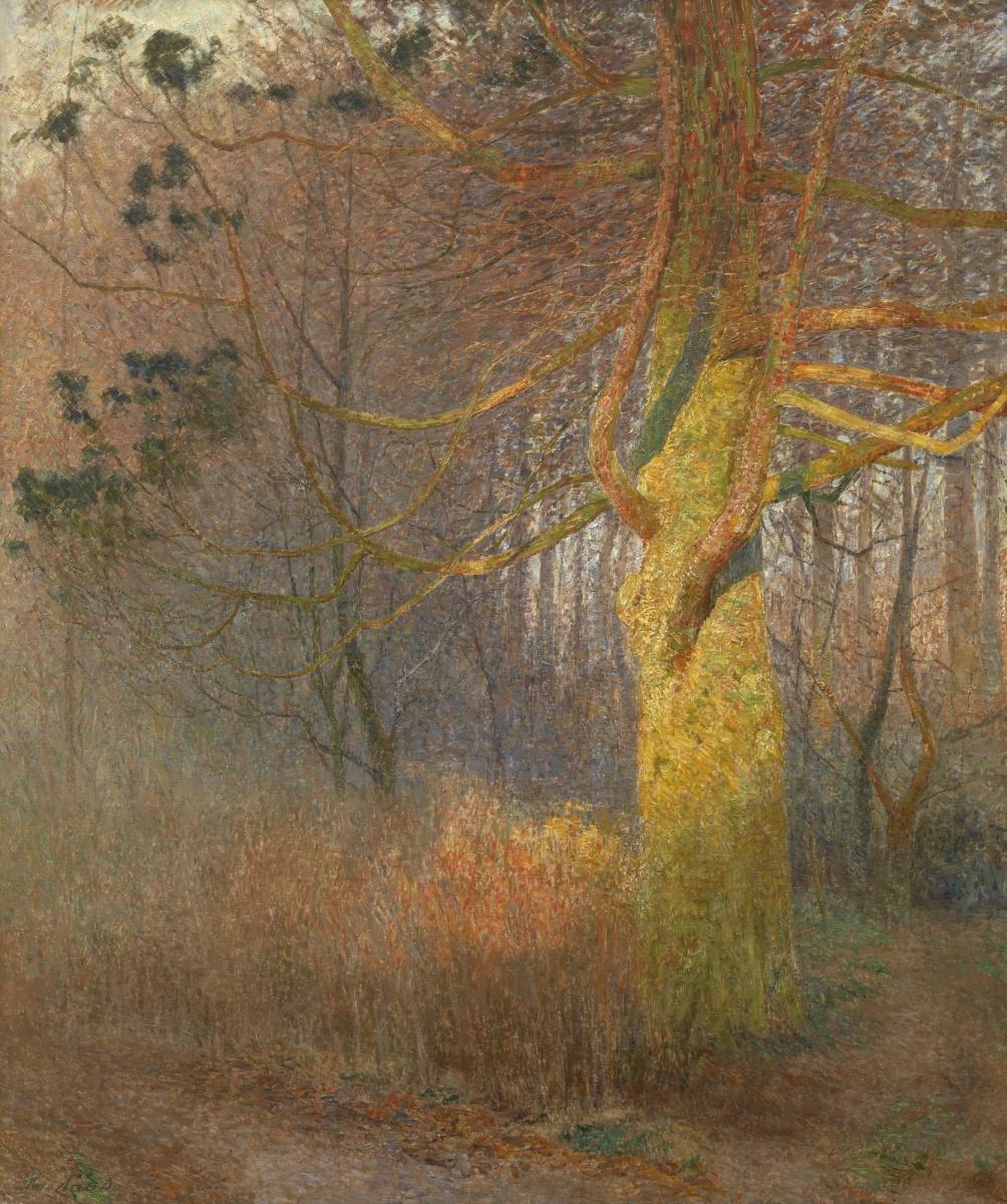 Emil Klaus. Sun rays on a tree
