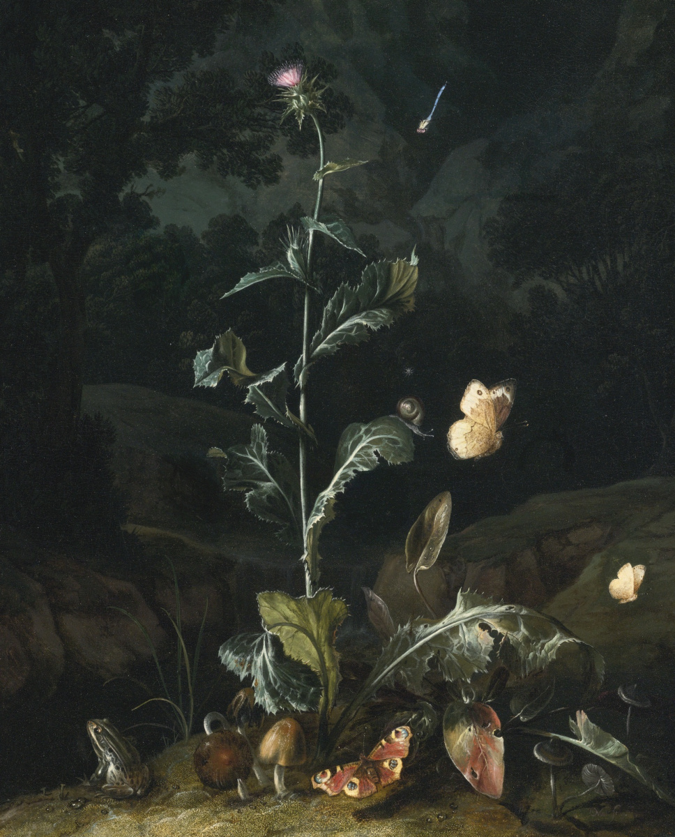 Отто Марсеус ван Скрик. Ночной лесной натюрморт с чертополохом, бабочками, грибами и лягушкой