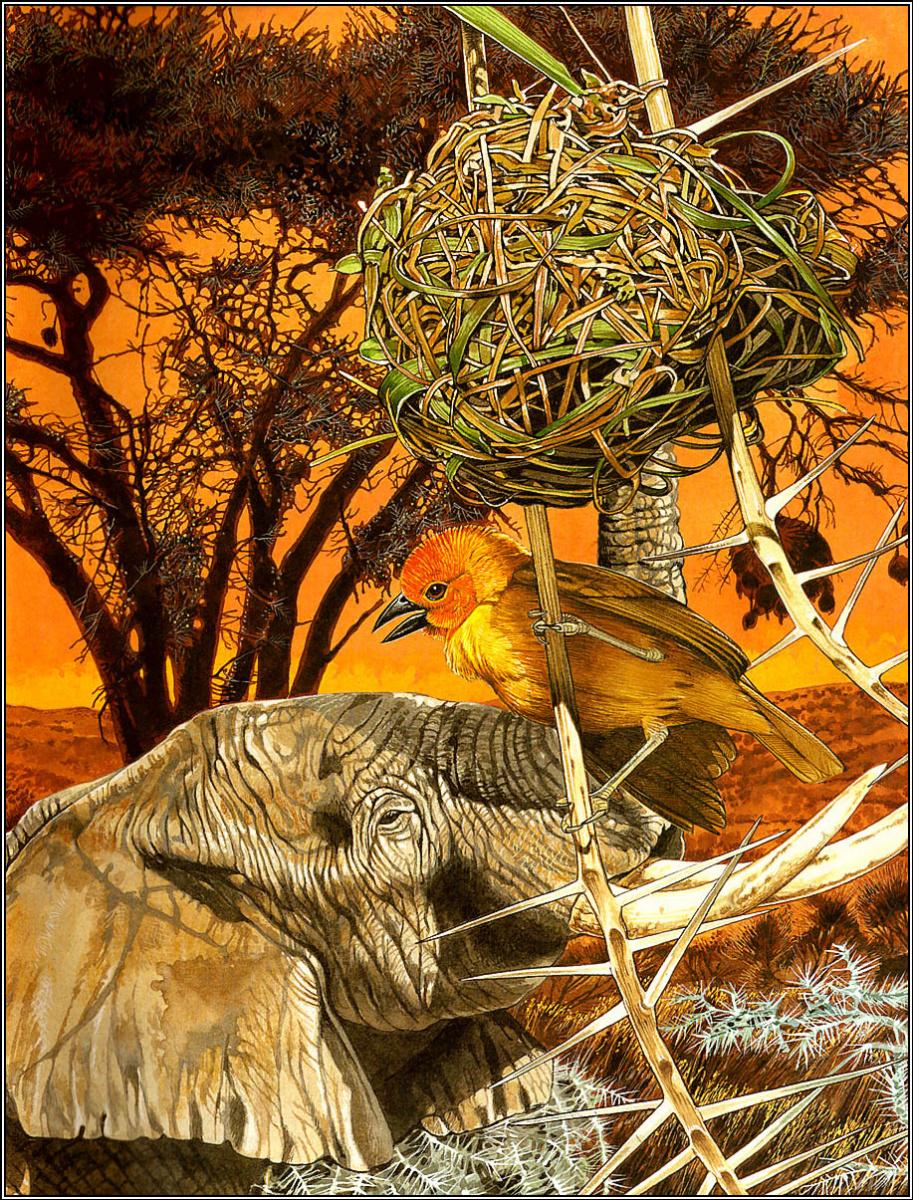 Тони Оливер. Птицы строят гнезда 14