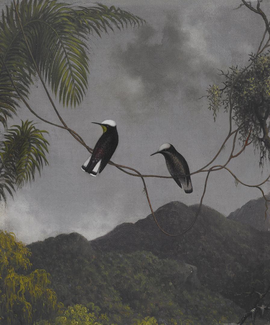 Martin Johnson Head. Griffon vulture on the vine