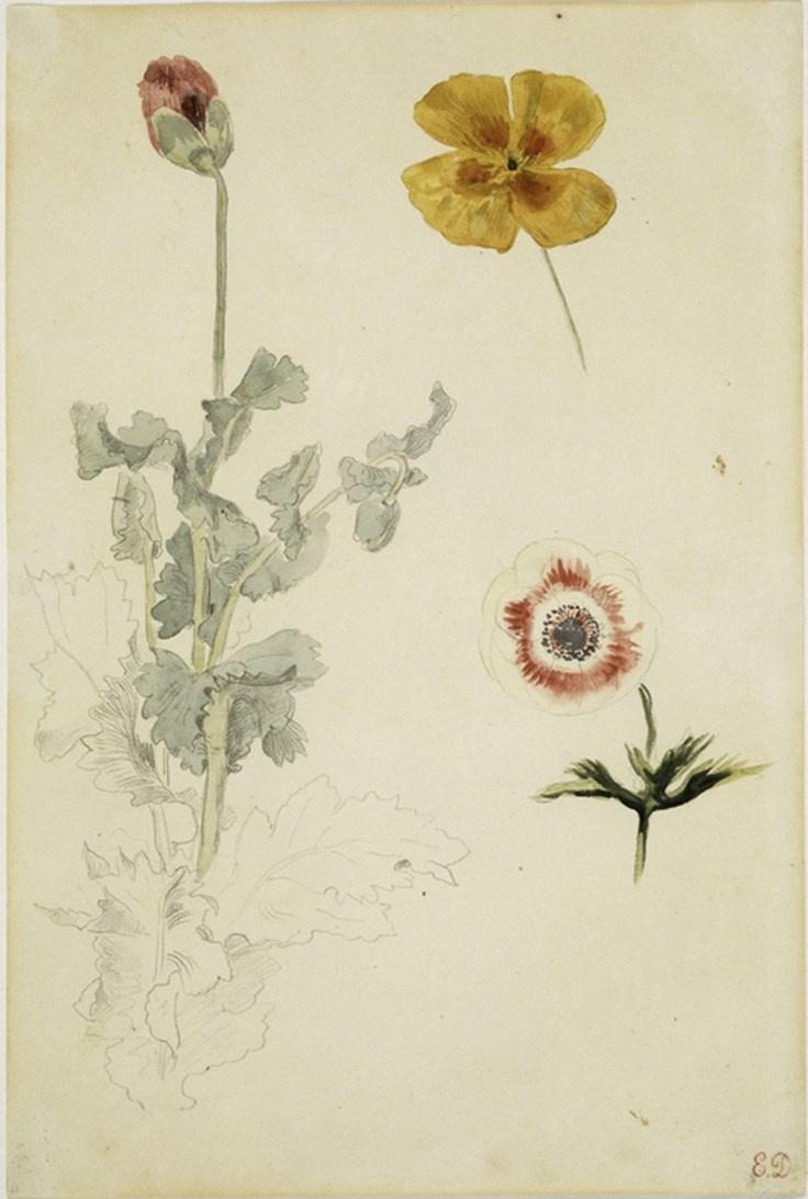 Eugene Delacroix. Flowers: poppy, anemone, and California poppy (Sketch)