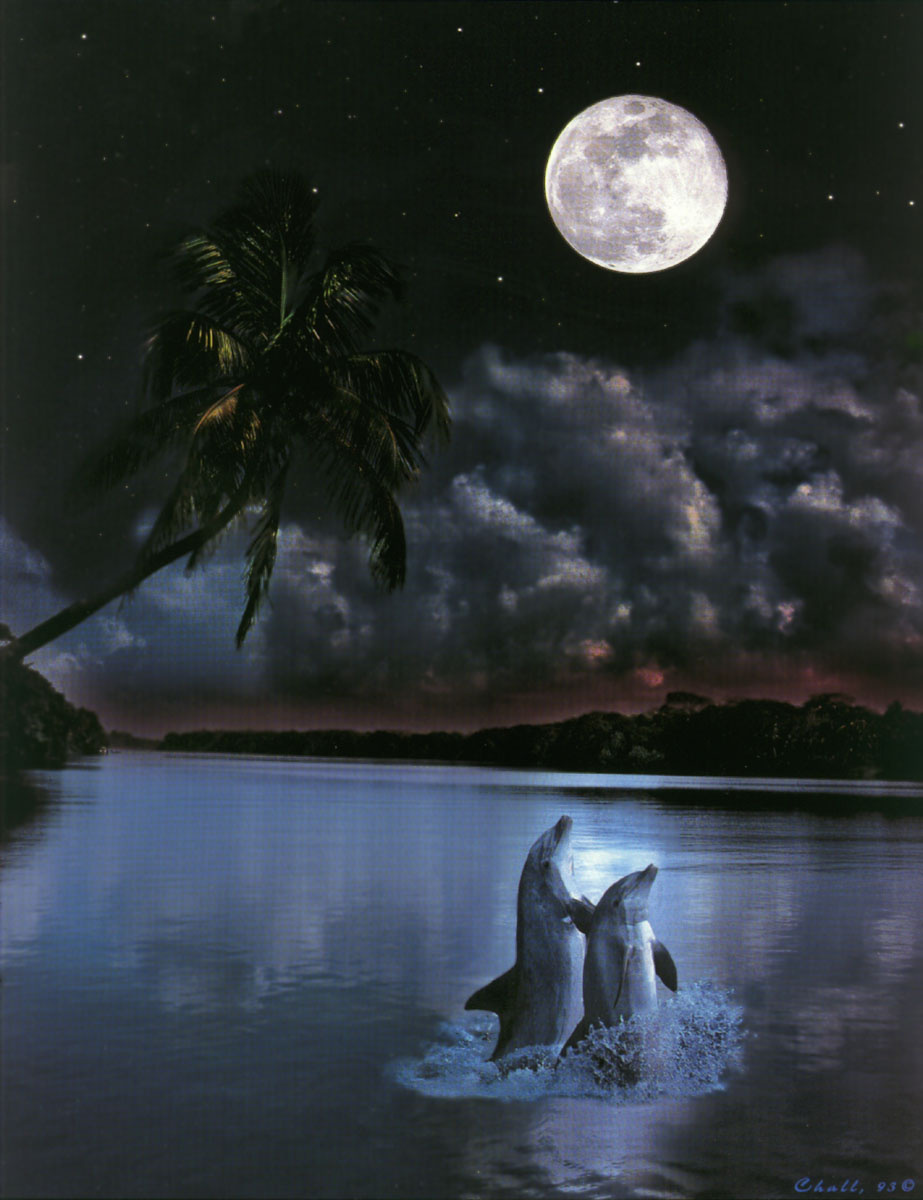 Barry Chal. Dolphins in the moonlight