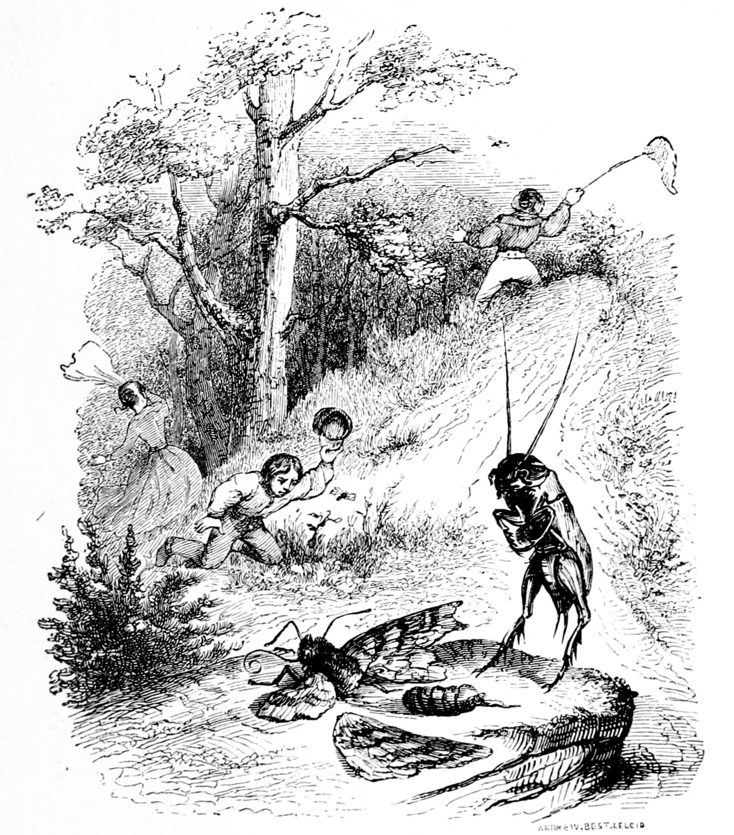 Jean Inias Isidore (Gerard) Granville. Real happiness. Illustrations to the fables of Florian