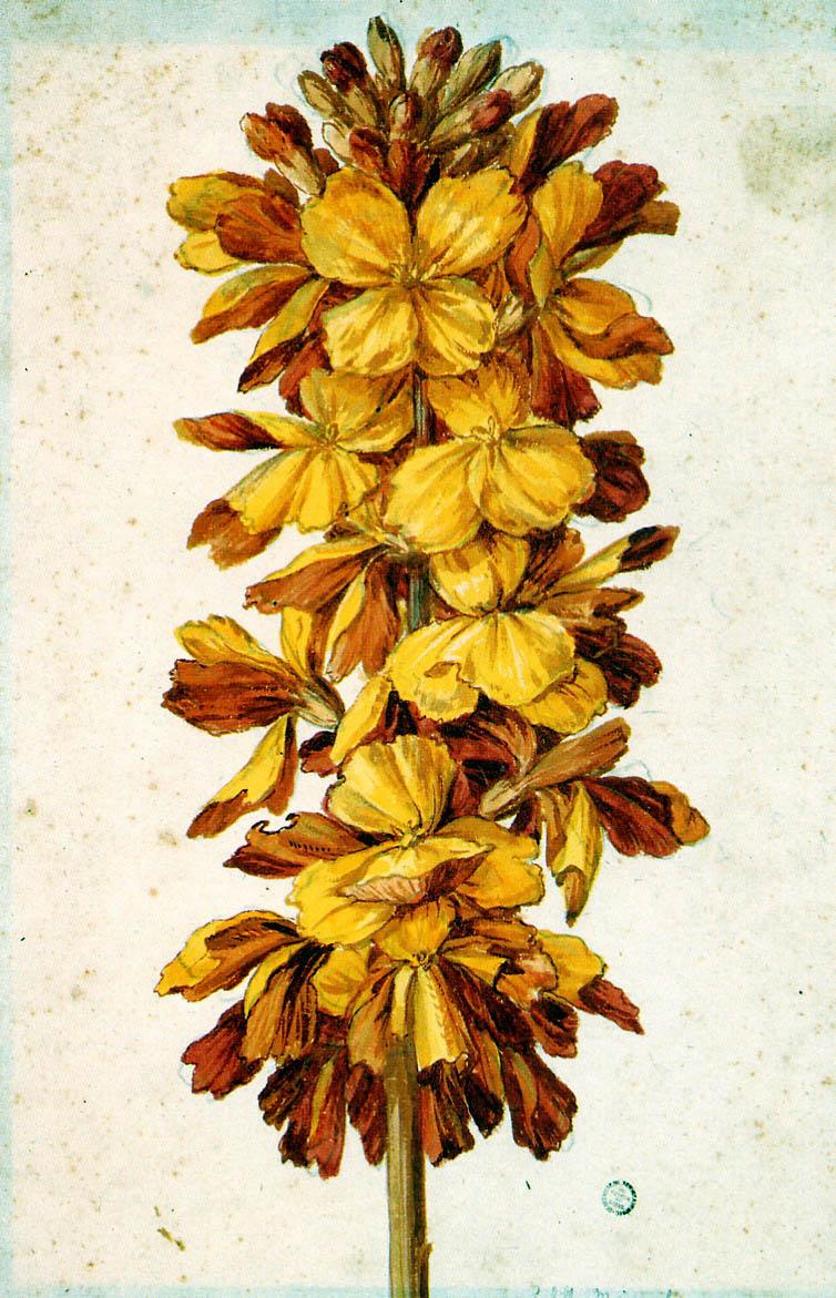 Maria Sibylla Merian. Flowers