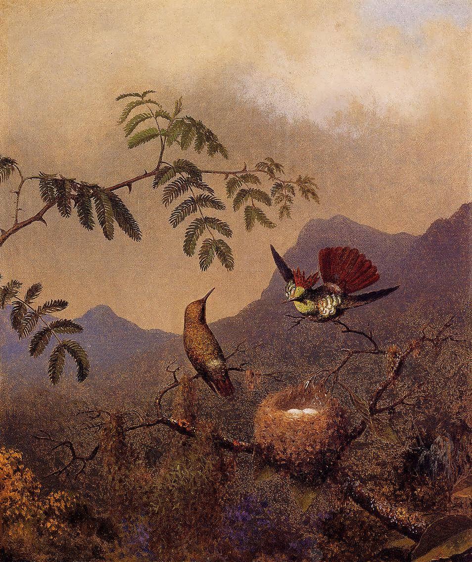 Hummingbird coquette