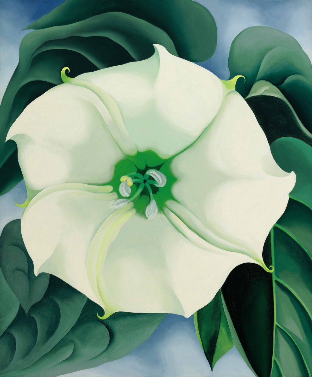 Georgia O'Keeffe. Jimson weed (White flower No. 1)