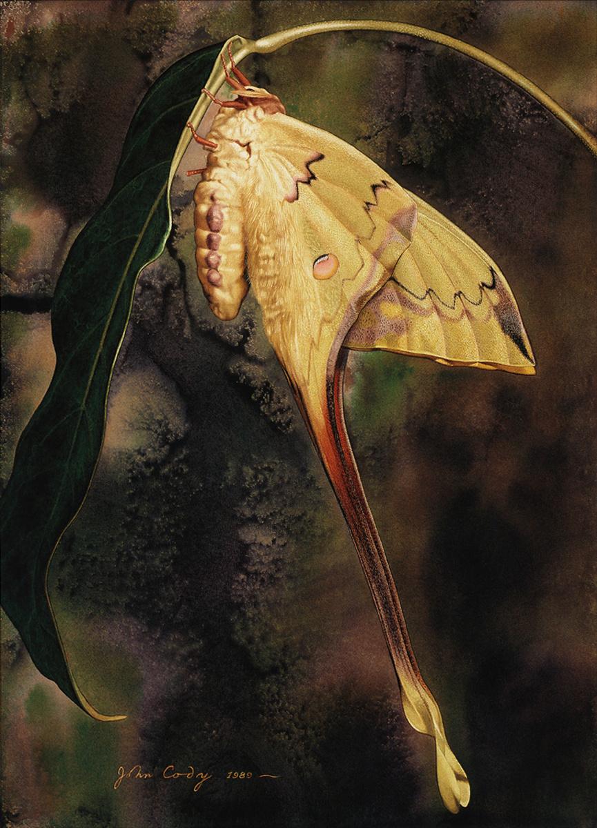 Джеймс Коди. Большие крылья