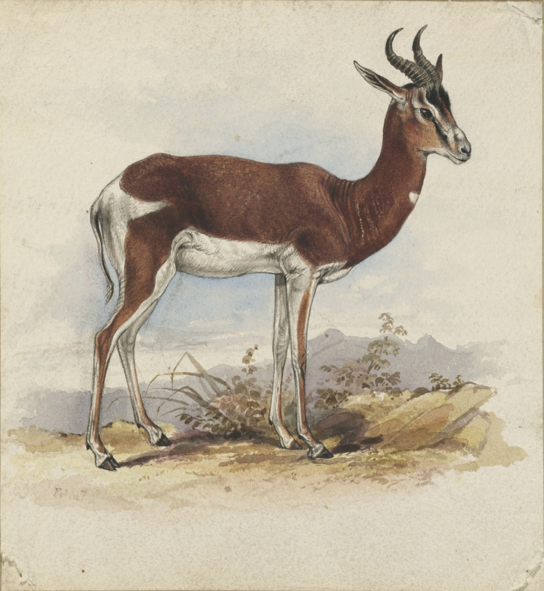 Эдвард Лир. Antelope