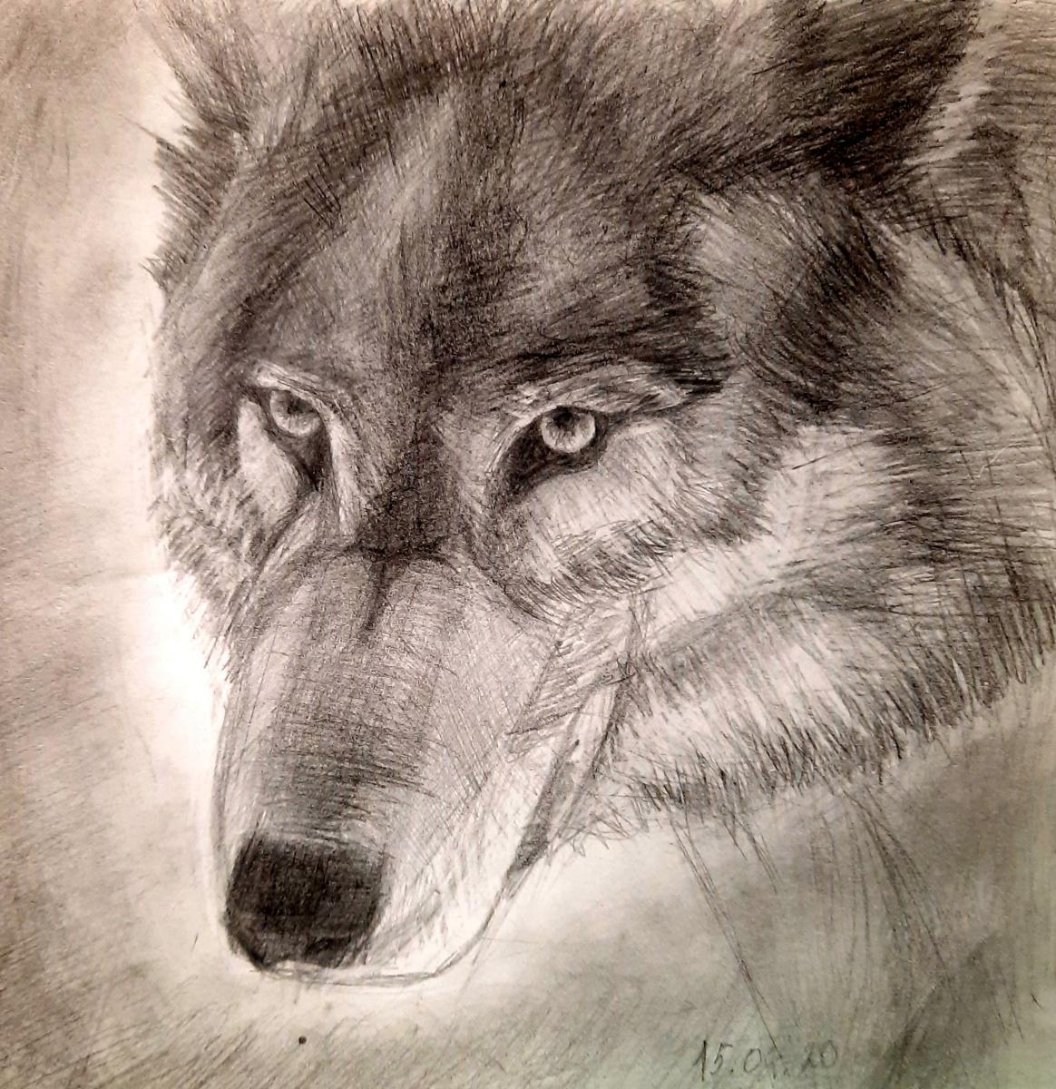 Julia Sergeevna Bochkareva. Wolf