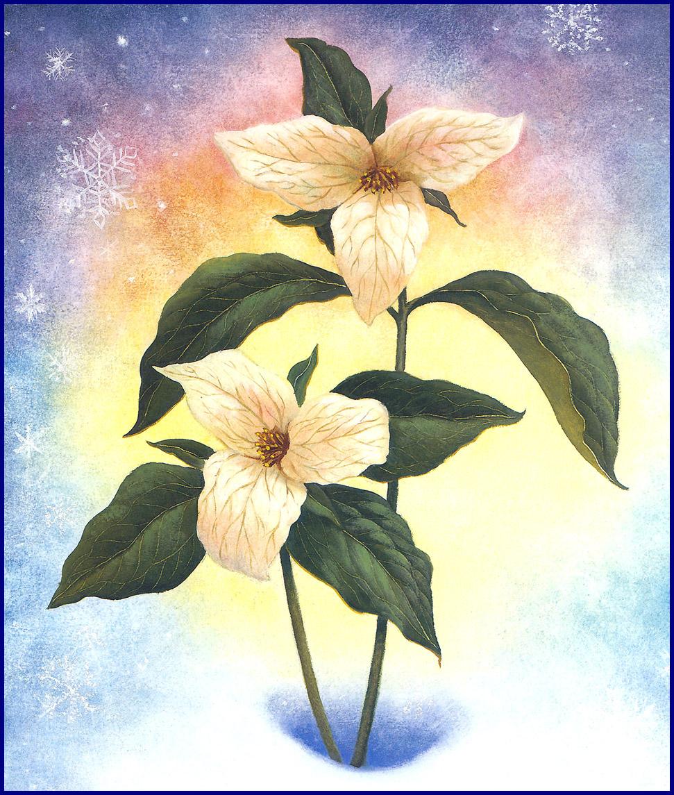 Рут Сандерсон. Весенний цветок