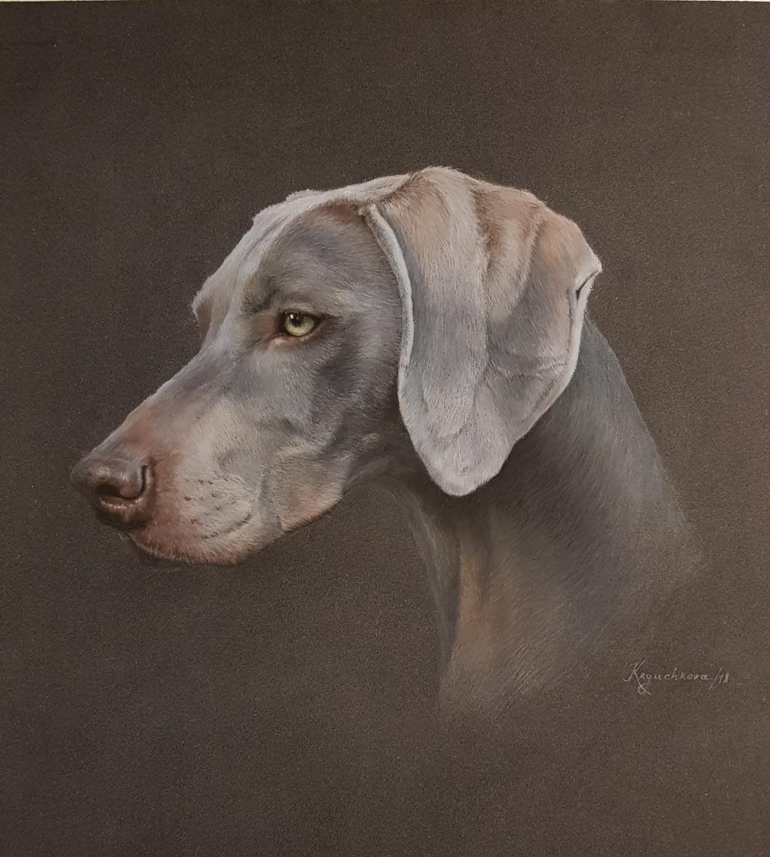 Irina Kryuchkov. Portrait of the Weimar Pointing Dog