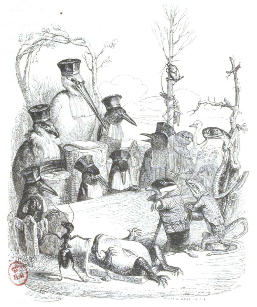 """Жан Иньяс Изидор (Жерар) Гранвиль. Дело несчастной жабы. """"Сцены общественной и частной жизни животных"""""""