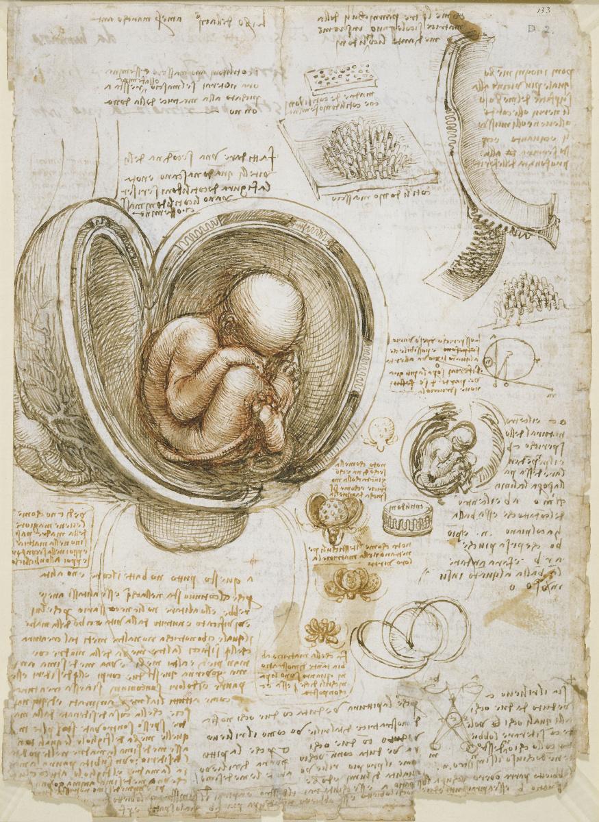 Леонардо да Винчи. Наброски плода в утробе
