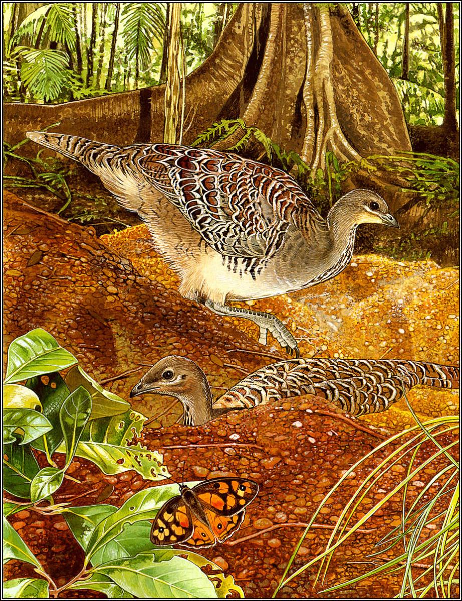 Тони Оливер. Птицы строят гнезда 11