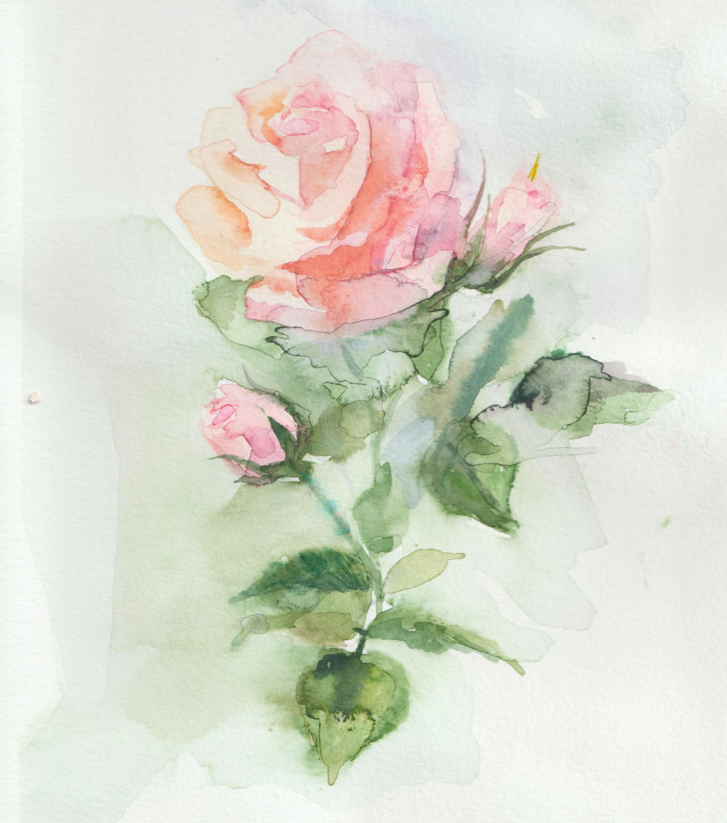 Sandra Nadaraya. Tea rose