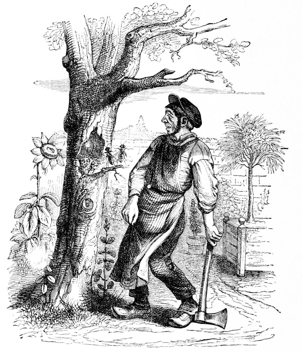 Жан Иньяс Изидор (Жерар) Гранвиль. Садовник и старое дерево. Иллюстрации к басням Флориана
