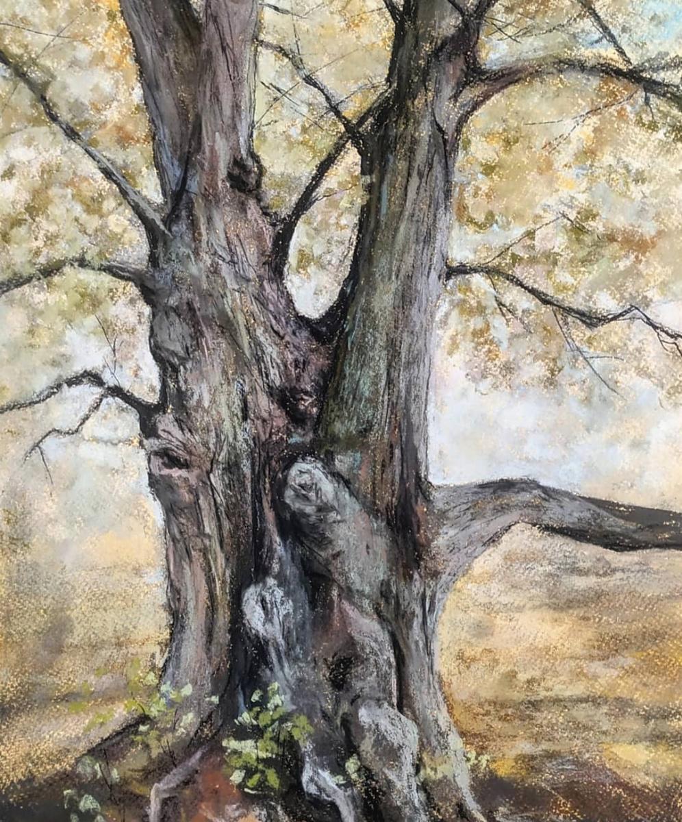 Alina Evgenievna Shvaryova. Old oak