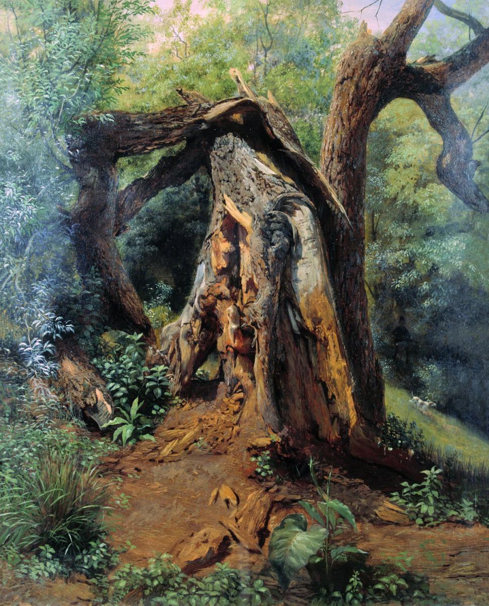 Лев Феликсович Лагорио. Старое дерево. Этюд