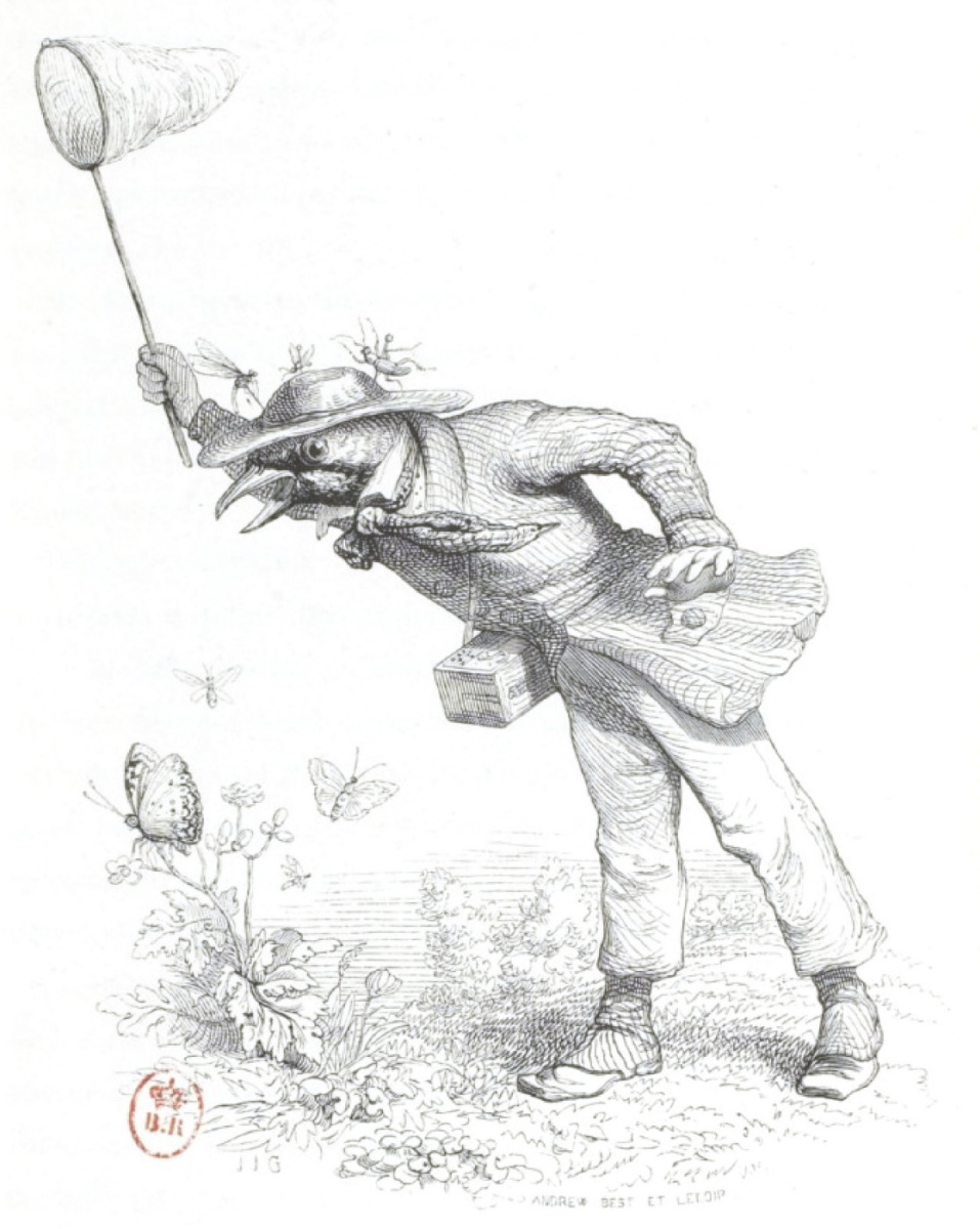 """Жан Иньяс Изидор (Жерар) Гранвиль. Ловля бабочек. """"Сцены общественной и частной жизни животных"""""""