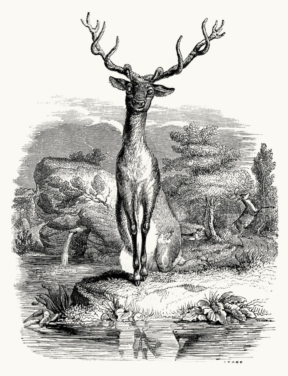 Jean Inias Isidore (Gerard) Granville. Deer. Illustrations to the fables of Jean de Lafontaine