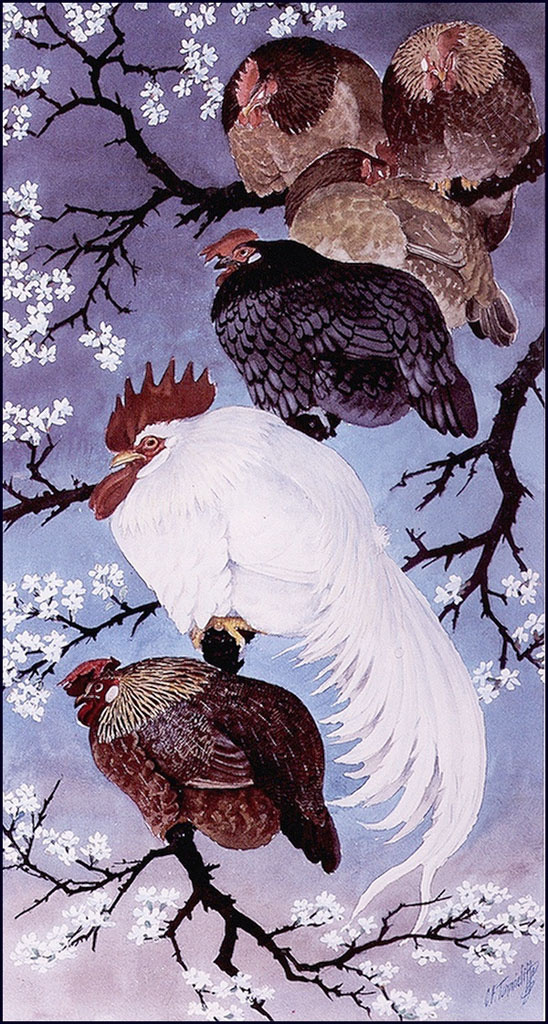 Charles Tannicliffe. Home bird on a tree